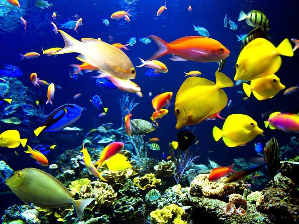 Fondo de escritorio de peces tropicales 1024x768 - Peces tropicales fotos ...