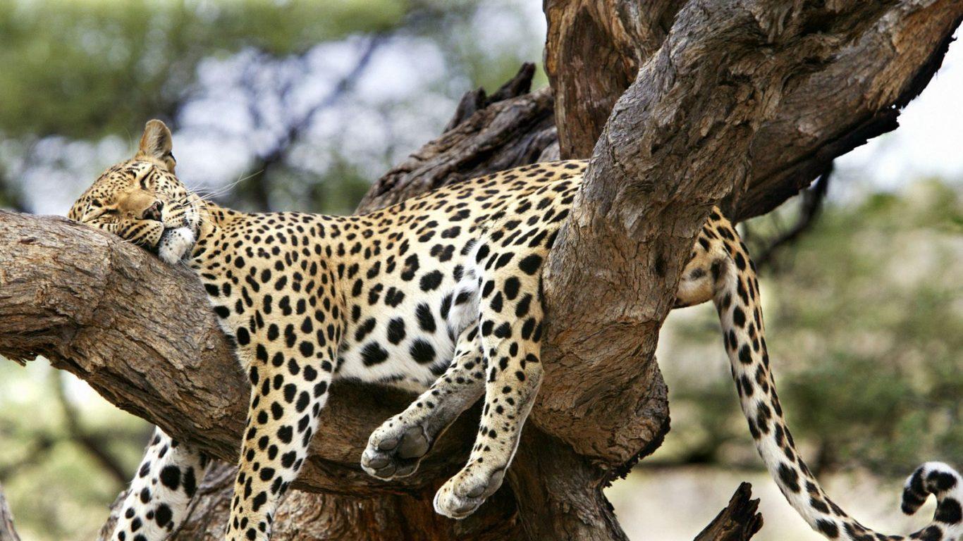 Animales Fondos De Escritorio Hd: 1366x768 :: Fondos De Pantalla Y