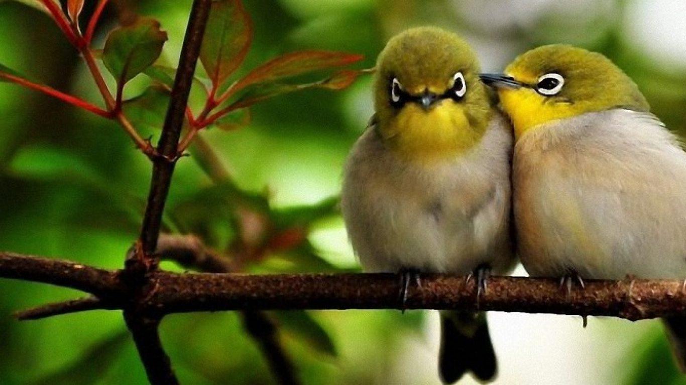 Fondos De Pantalla De Pájaros