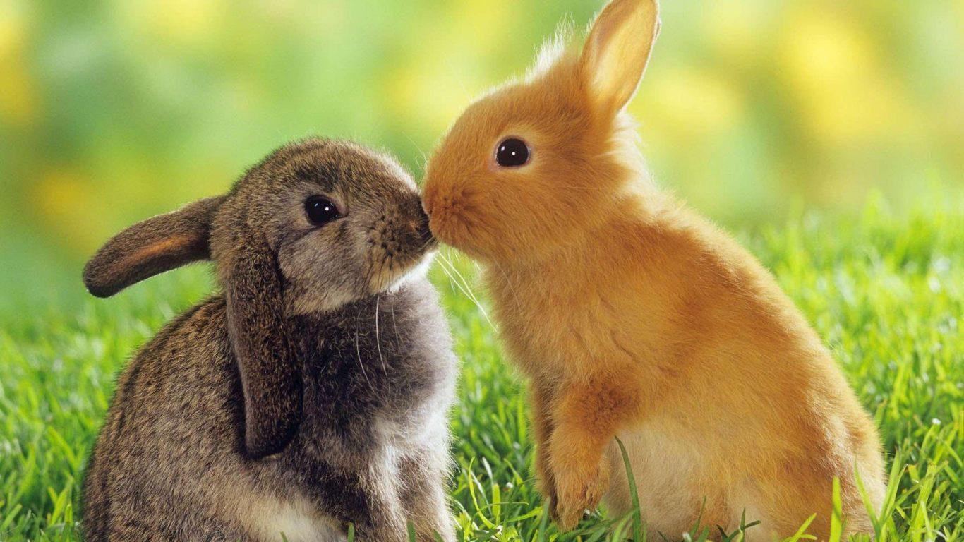 Fotos De Animales Salvajes Para Fondo De Pantalla: Wallpaper Con Conejos Salvajes