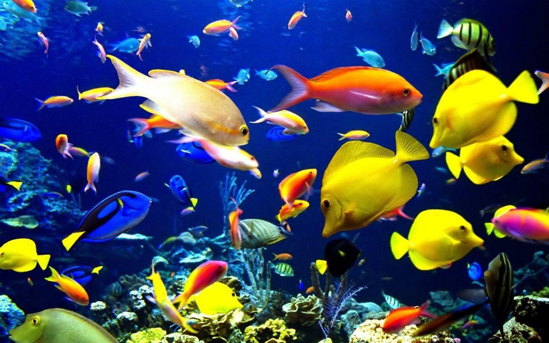 Fondo de escritorio de peces tropicales 1440x900 for El fondo de escritorio