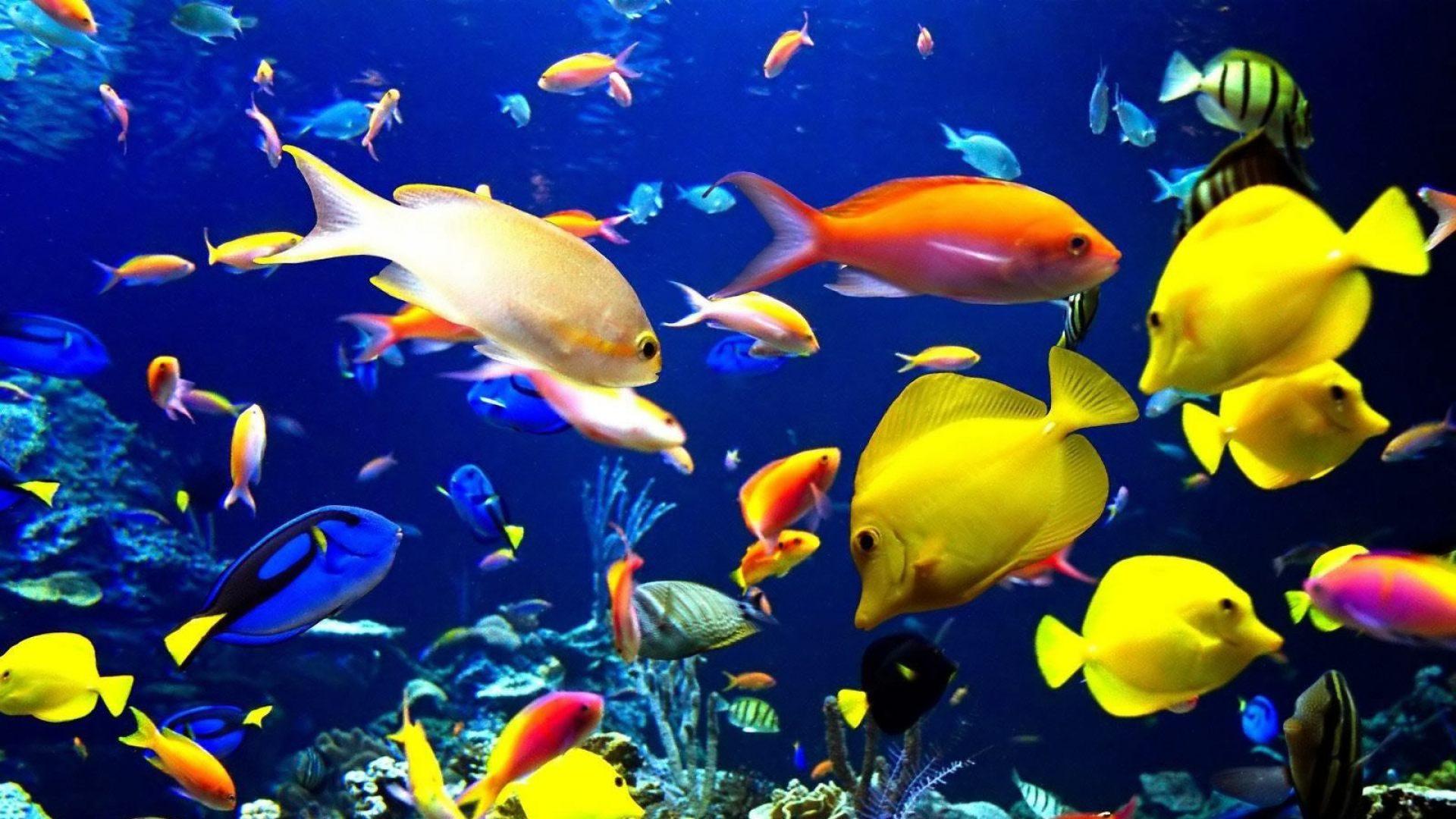 Fondo de escritorio de peces tropicales 1920x1080 for Peces tropicales