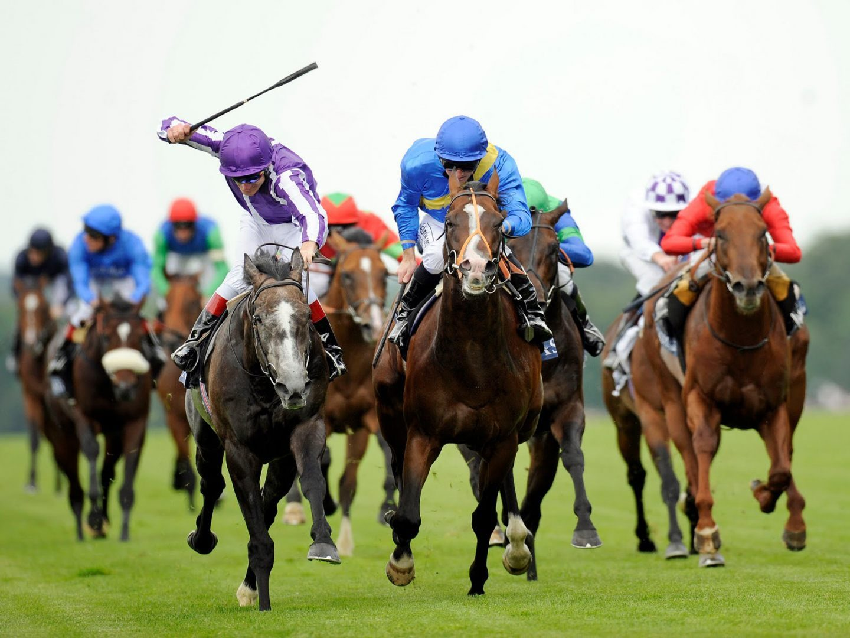 Galer a de im genes fondos de caballos for Top pictures of the day