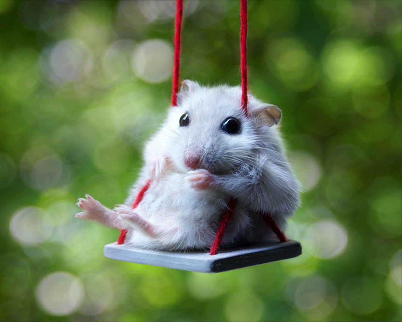 Animaliños.. - Página 2 Fondo-artistico-de-un-hamster