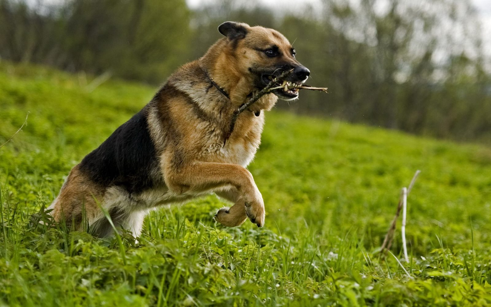 Galer a de im genes fondos de perros for Fondos de pantalla de perritos