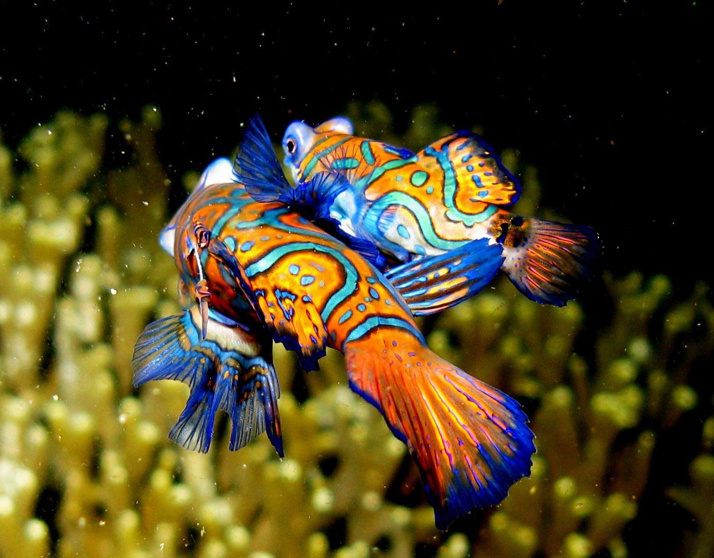 Galer a de im genes fondos de peces for Imagenes de jardines exoticos