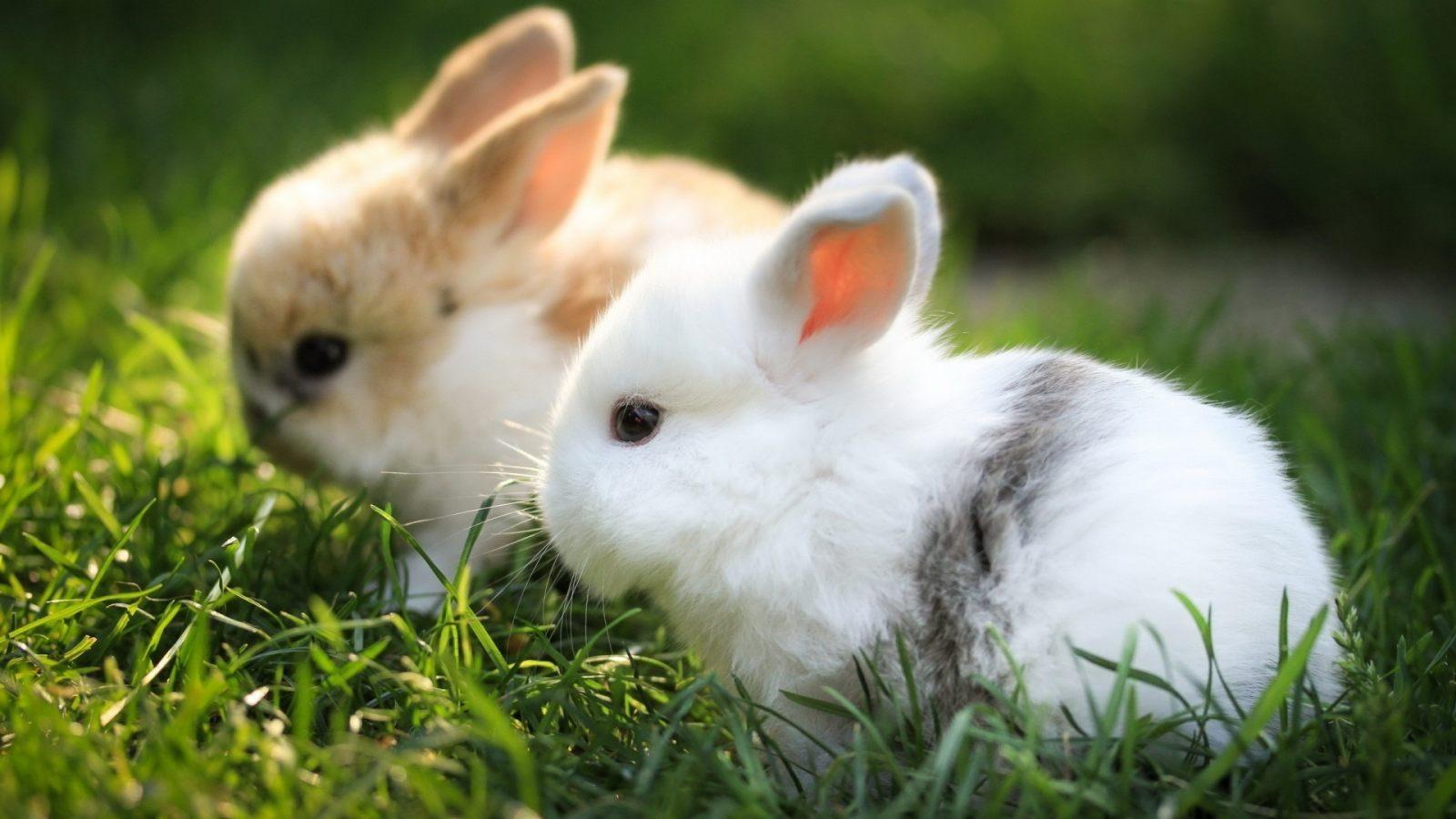 Galer a de im genes fondos de conejos - Casas para conejos enanos ...