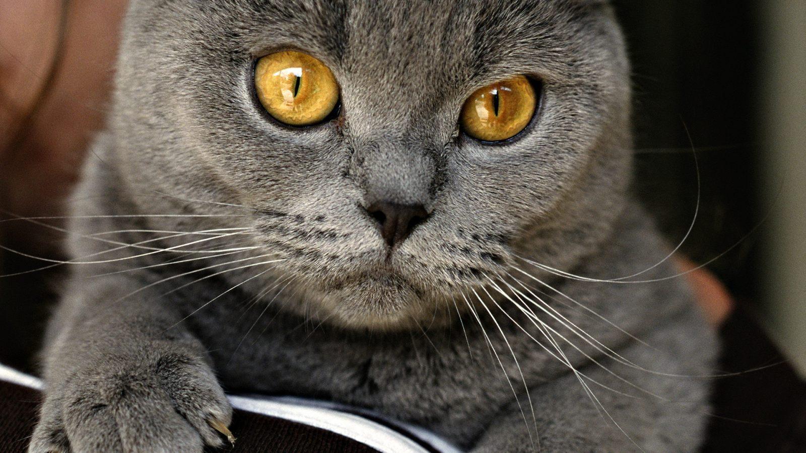 Коты на заставку