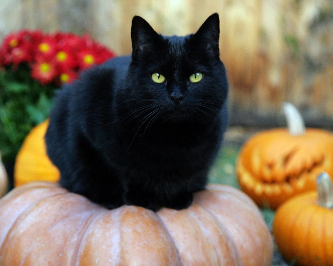 Wallpaper de un gato negro de Halloween